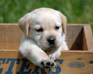 petit chien donner